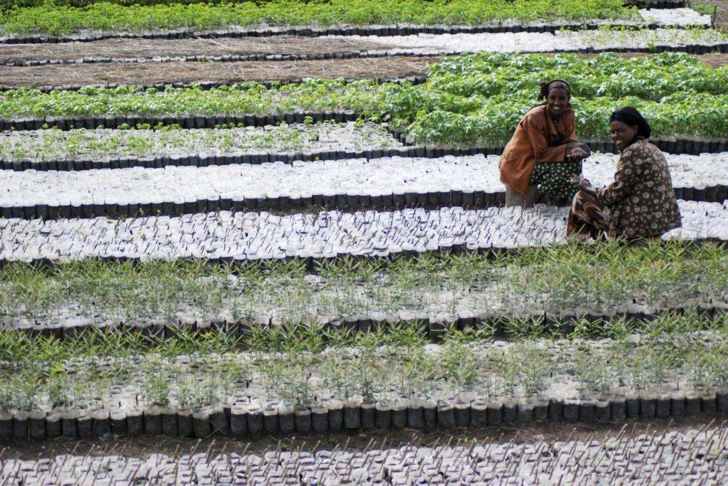 Two women growing plants in a field
