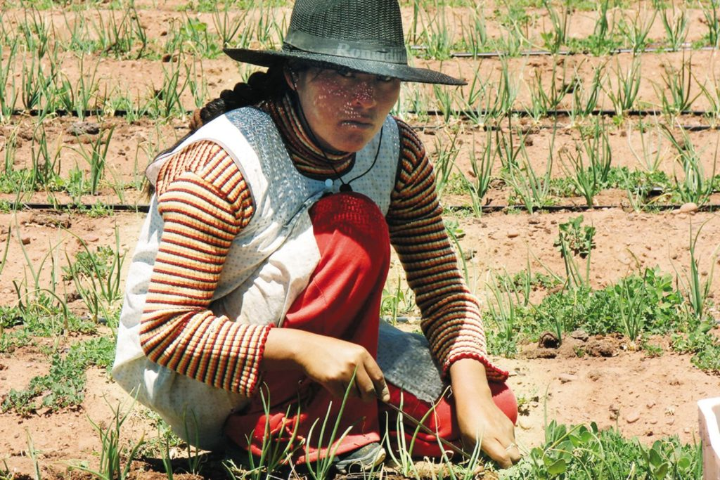 A woman working in the field