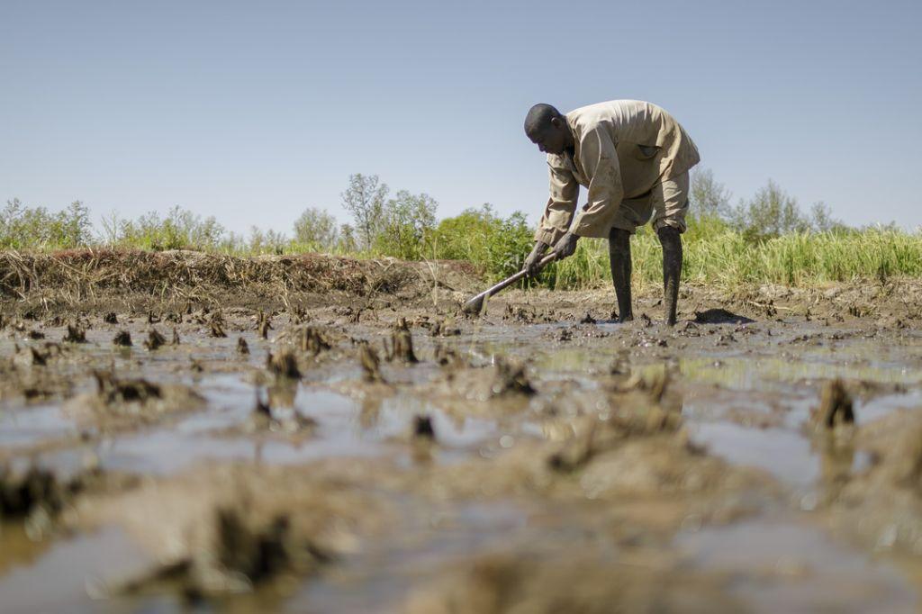 Worker in a flooded field