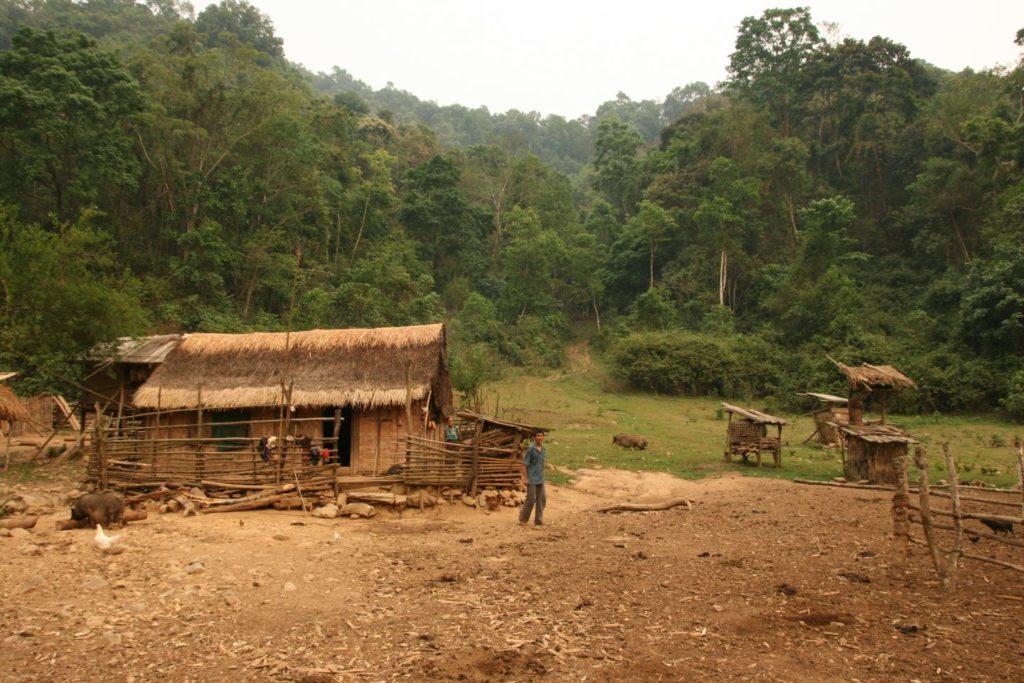 Rural development through forestry
