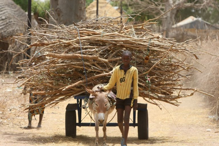 A child transports wood on a cart