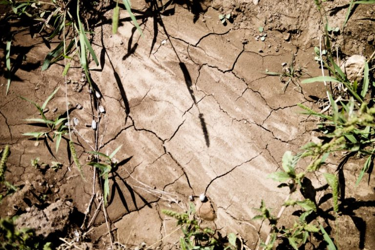 A parched field with cracked earth