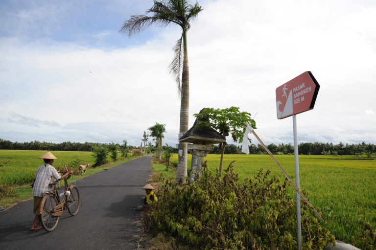 A man with a bicycle on a road between fields