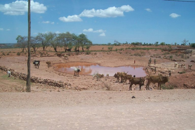A watering hole with cattle