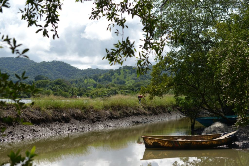 A boat in front of mangroves
