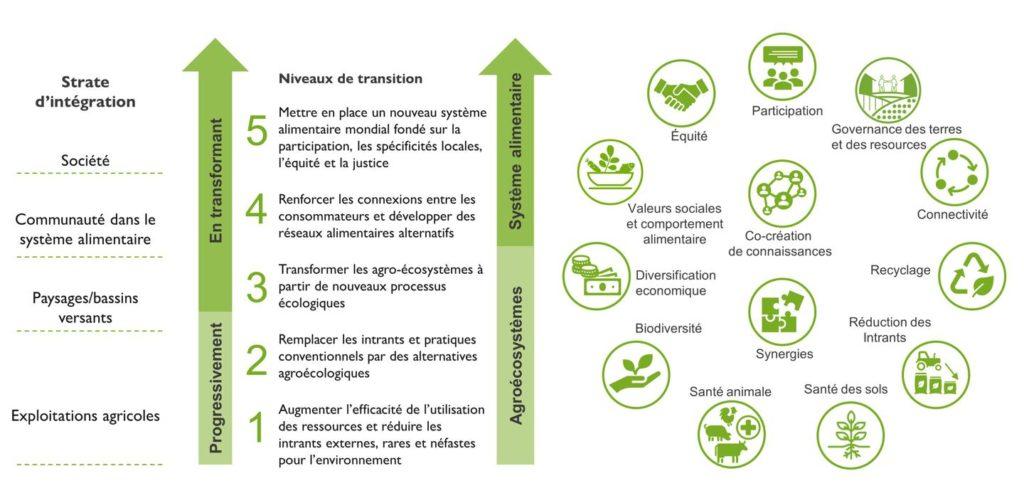Cadre de l'agroécologie